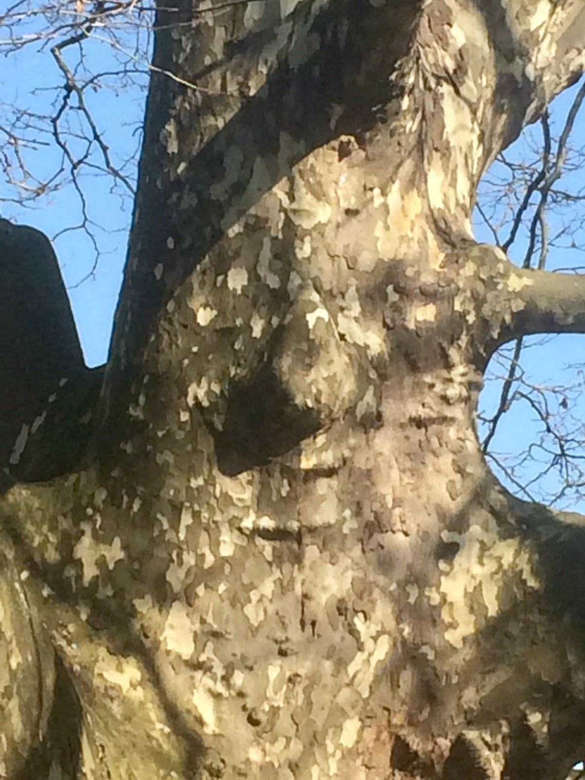 Wer findet das Baumwesen : )