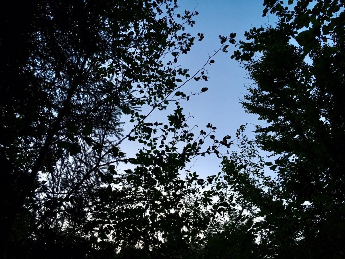 Der herbstliche Wald hüllt die Ritualteilnehmer früh in Dunkelheit