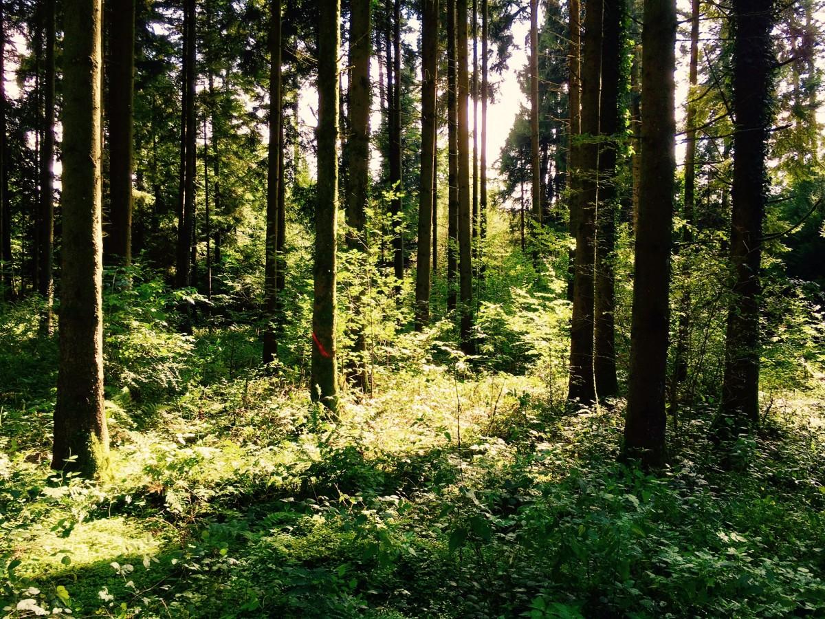 Im Ustermer Wald