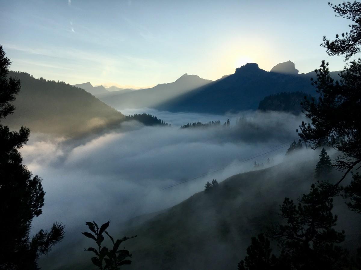 Medizinwanderungswochenende im herbstlichen Bergwald