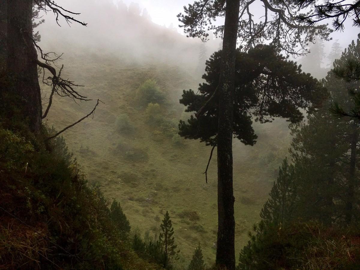 Medizinwanderung im herbstlichen Bergwald