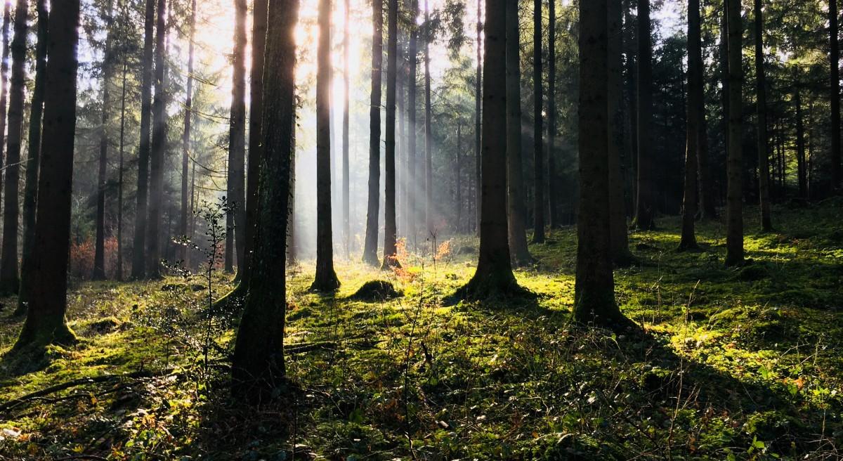 Bäume sind Heiligtümer. Wer ihnen zuzuhören weiss, der erfährt die Wahrheit. - Hermann Hesse