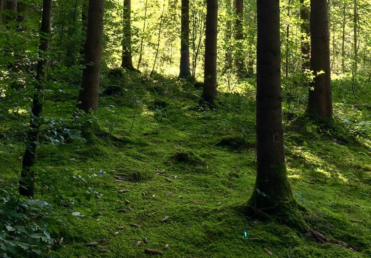 Im tiefen Wald öffnet sich ein Raum voller Ruhe