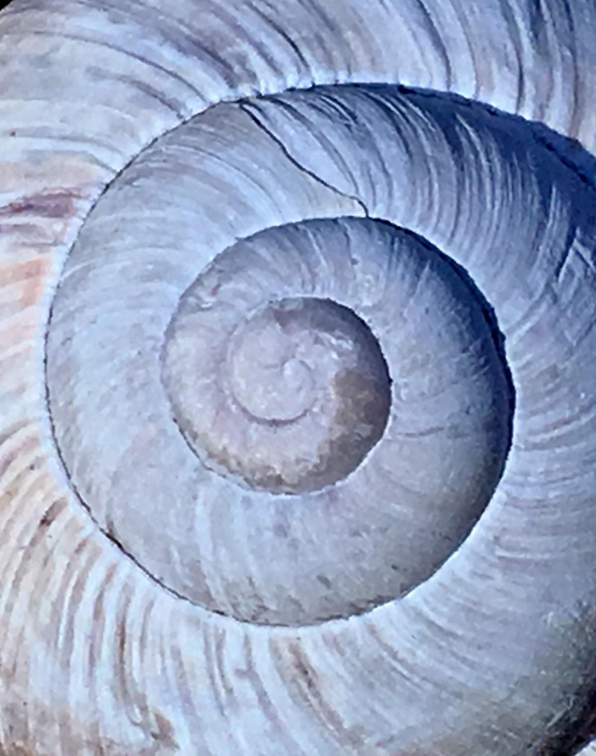 Symbolhaft spiegelt uns die Natur und schenkt uns Hinweise für unseren Weg